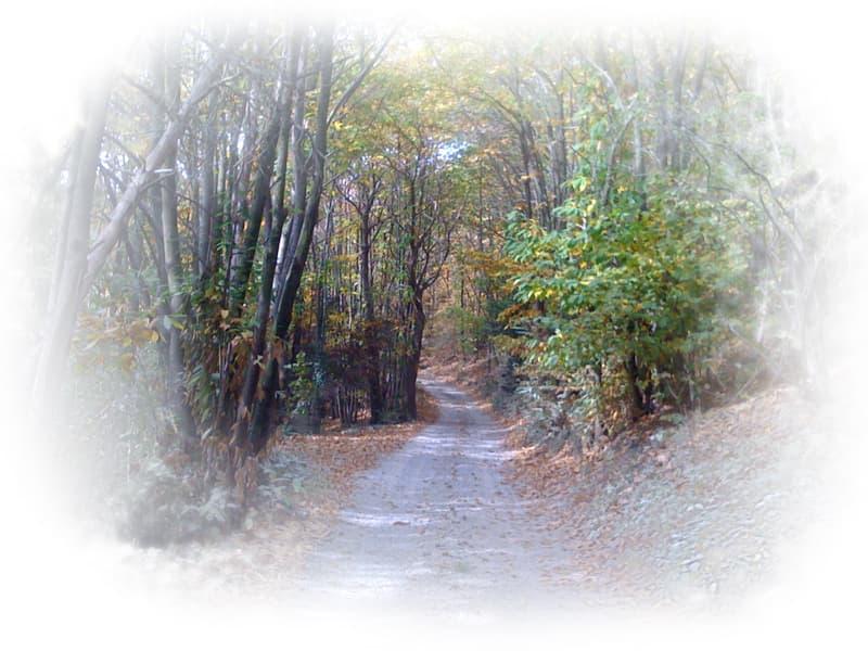 natura-bosco-sentiero